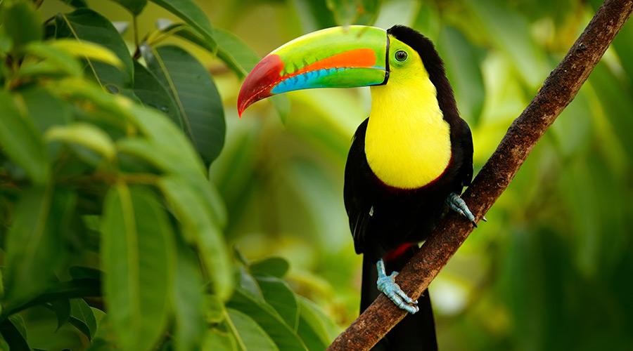 Wildlife in Costa-Rica
